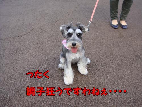 DSC05302@_convert_20111222220414.jpg
