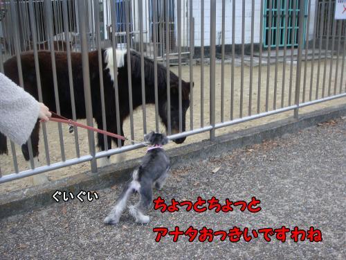 DSC05312@_convert_20111222221922.jpg