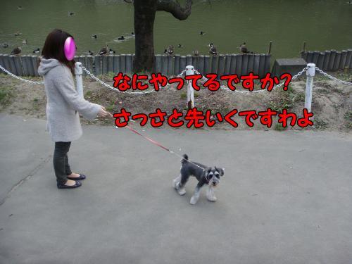 DSC05319@_convert_20111222223128.jpg
