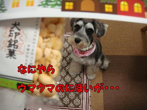 DSC05367@_convert_20111218230102.jpg