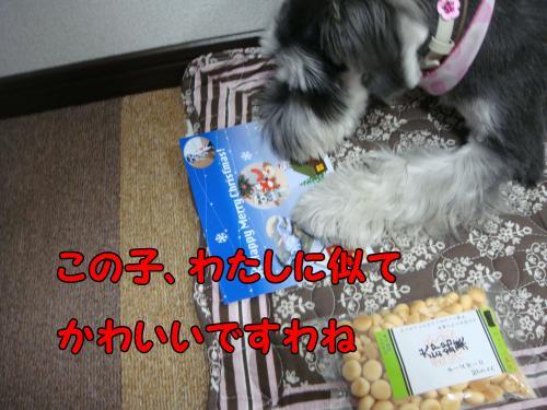 DSC05372@_convert_20111218230324.jpg