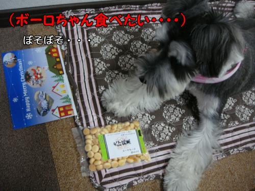 DSC05375@_convert_20111218230422.jpg