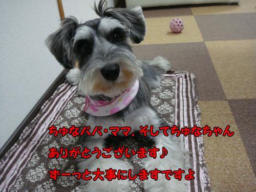 DSC05377@_convert_20111218230512.jpg
