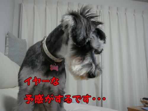 DSC05411@_convert_20111225123546.jpg