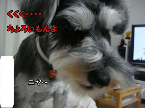 DSC05417@_convert_20111225233230.jpg