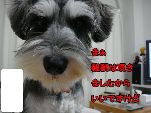 DSC05418@_convert_20111225233148.jpg