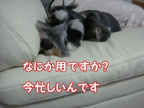 DSC05422@_convert_20111230100450.jpg