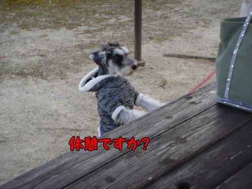DSC05469@_convert_20111225014447.jpg
