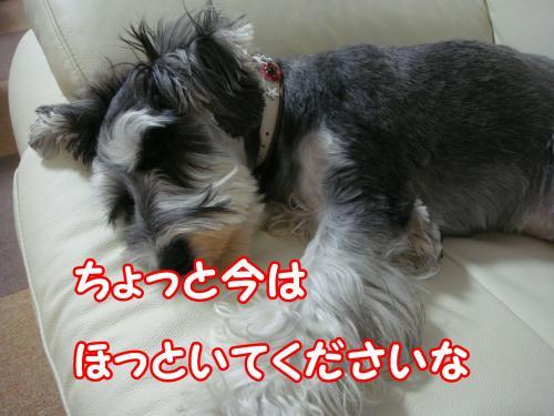 DSC05543@_convert_20111230095902.jpg