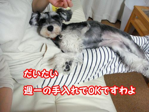 DSC05565@_convert_20120108004404.jpg
