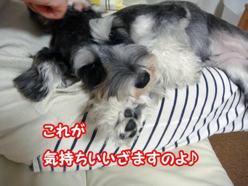 DSC05568@_convert_20120108004302.jpg
