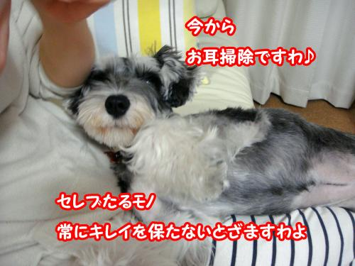 DSC05573@_convert_20120108004122.jpg