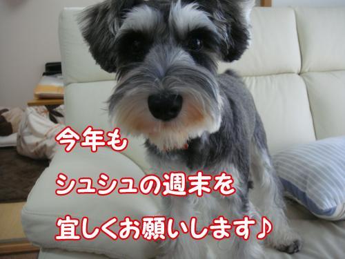 DSC05577@_convert_20111230112354.jpg