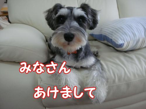 DSC05579@_convert_20111230111622.jpg