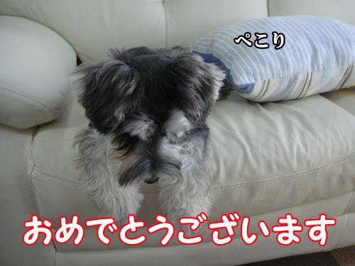 DSC05585@_convert_20111230111720.jpg