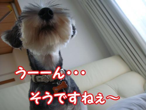DSC05588@_convert_20111230113708.jpg
