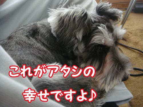 DSC05592@_convert_20111230114102.jpg