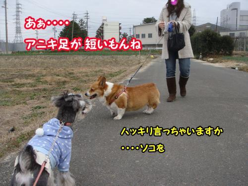 DSC05607@_convert_20120102001959.jpg