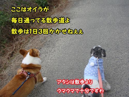 DSC05608@_convert_20120102001825.jpg