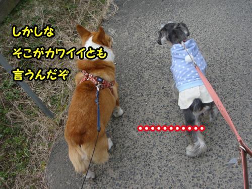 DSC05609@_convert_20120102002047.jpg