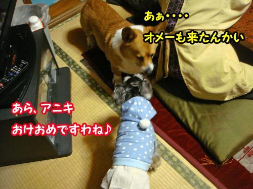 DSC05633@_convert_20120102001724.jpg