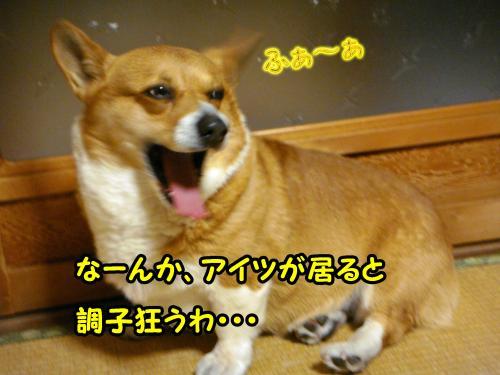 DSC05645@_convert_20120102002914.jpg