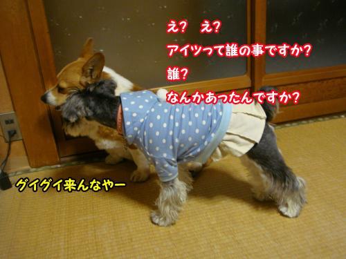 DSC05648@_convert_20120102002954.jpg