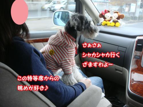 DSC05653@_convert_20120104111134.jpg