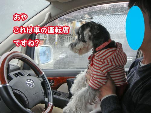 DSC05712@_convert_20120104224420.jpg