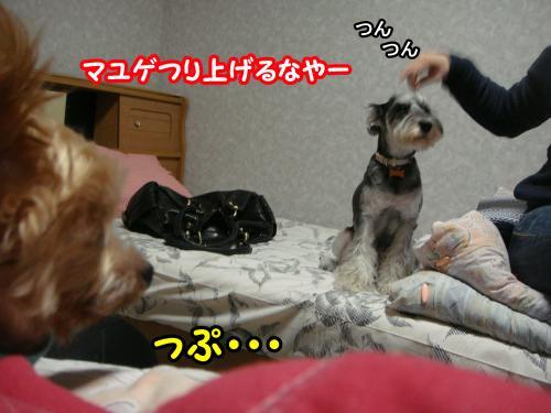 DSC05719@_convert_20120106232427.jpg