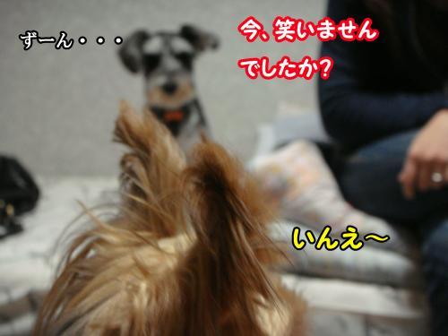 DSC05721@_convert_20120106232533.jpg