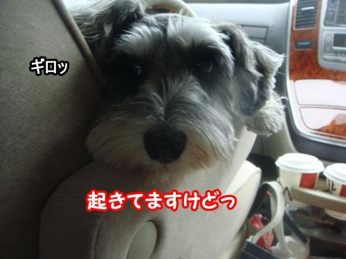 DSC05743@_convert_20120107001736.jpg