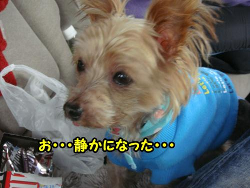 DSC05761@_convert_20120107001529.jpg