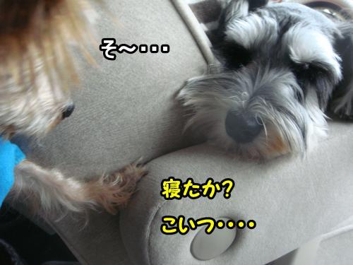 DSC05769@_convert_20120107001639.jpg