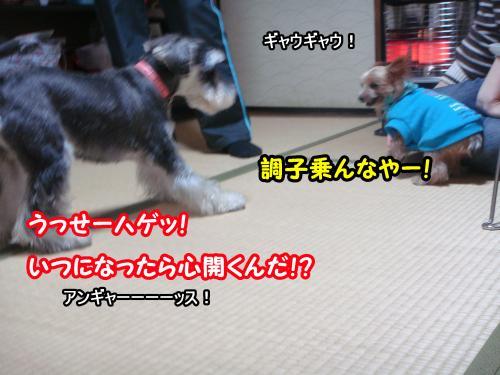 DSC05788@_convert_20120107122914.jpg