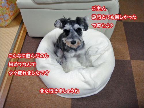 DSC05792@_convert_20120107123017.jpg