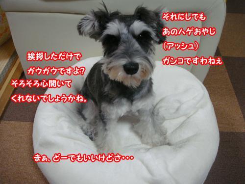 DSC05793@_convert_20120107123101.jpg