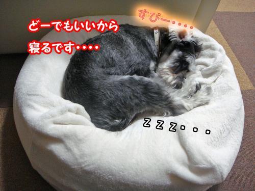 DSC05795@_convert_20120107123139.jpg