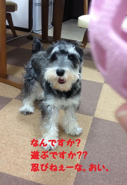 IMG_0094@_convert_20111211011655.jpg