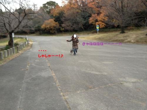 IMG_5178@3_convert_20111211213342.jpg