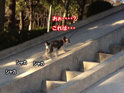 IMG_8762@_convert_20120109100938.jpg