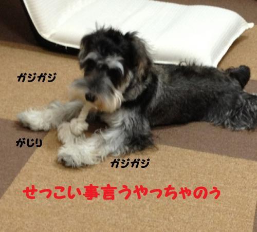 IMG_9087@3_convert_20111213220256.jpg