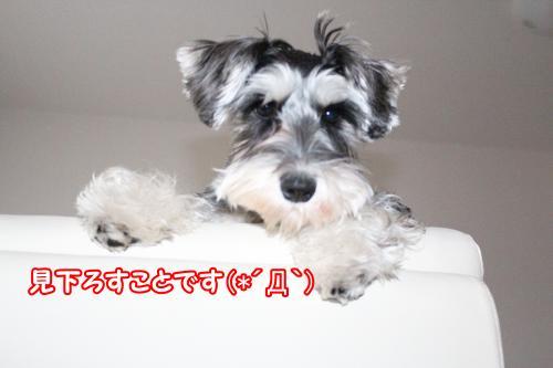 eos+009@_convert_20120118221741.jpg