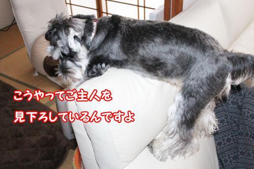 eos+015@_convert_20120118222231.jpg
