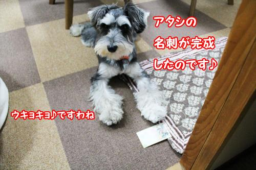 eos+181@_convert_20120111212225.jpg