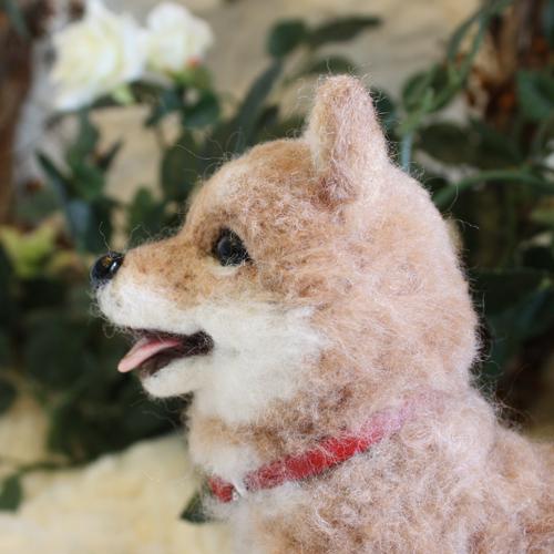 柴犬ユザワヤ3