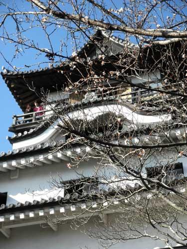 犬山城四季桜