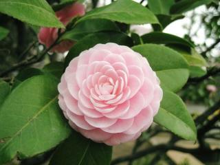 可愛らしいピンクに癒される~