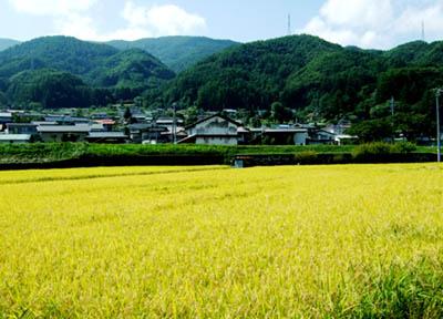 suwa_4_08.jpg