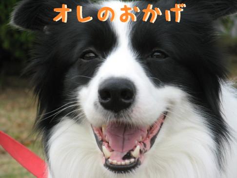 IMG_0008_11.jpg